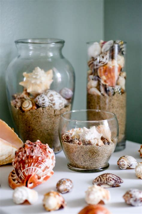exposure is and shell promptly tell you its skin cancer how to clean seashells sea urchins and coral the