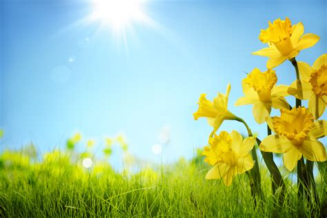 what is a spring of spring spring wallpapers images photos pictures backgrounds