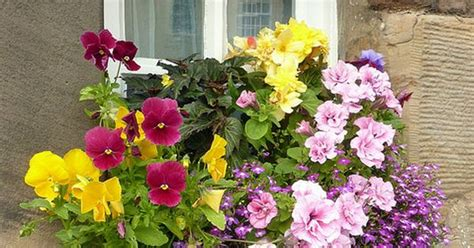 Windowsill Flower Garden Pretty And Colorful Flowers On The Windowsill Quot Diy Home
