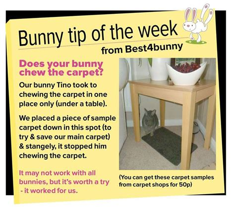 Must For The Week The House Bunny by 17 Best Images About Bunny Care Ideas On