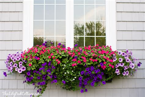 Best Window For Plants Best Plants For Window Boxes Western Garden Centers