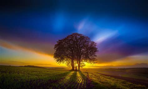 wallpaper blue tree blue sky sunset alone tree wallpaper dreamlovewallpapers