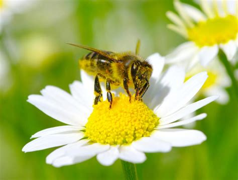 why we need to save the bees 10 things you can do to help