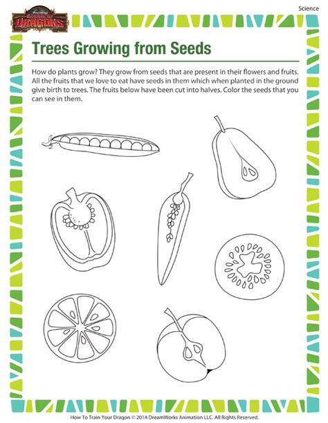 Seed Worksheets For Kindergarten by 28 Plants And Seeds Worksheets For Kindergarten