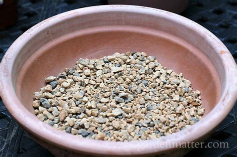Soil Mix For Outdoor In Ground Succulents - growing hens the hardy succulents garden matter