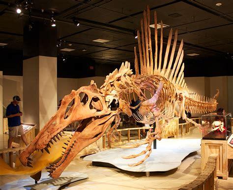 spinosaurus wikipedia