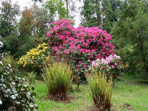 imagenes originales de jardines arbustos para jardin cuidar de tus plantas es facilisimo com