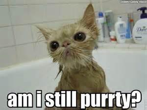 Wet Cat Meme - wet cats look so funny cuteness pinterest cats so