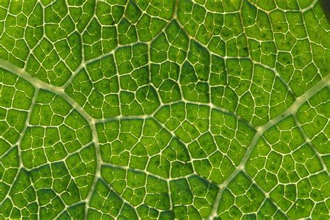 pattern leaf veins leaf patterns leaves and patterns on pinterest