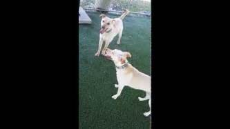 play time a simons 0857867717 shelby s play time with simon youtube