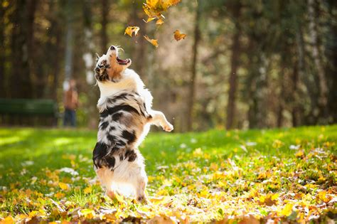 where can i find free puppies in my area 19 adorable dogs that are ready for autumn leaves