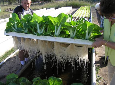 how home aquaponics can deliver a never ending supply of