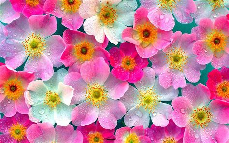 flower wallpaper wallpapers pink flowers wallpapers