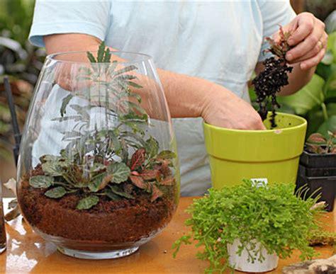 best plants for self contained terrarium plant a terrarium gardener s journal