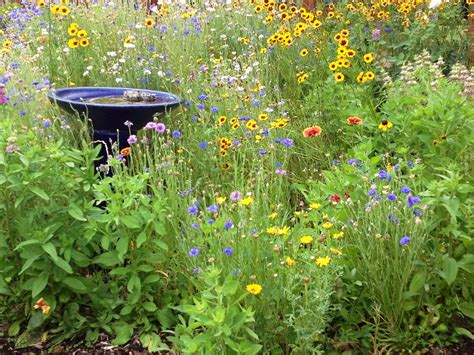wildflower backyard my backyard wild flower garden gardening pinterest