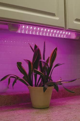 pin  katie bowman  farmgarden   grow lights
