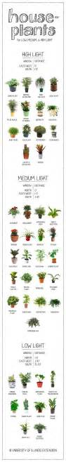 plants that need low light high medium low light house plants edial india