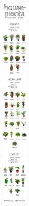plants that need low light high medium low light house plants edial india
