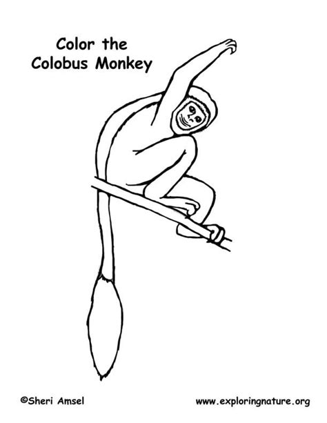 Colobus Monkey Coloring Page | black and white colobus monkey coloring page exploring