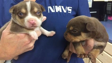 8 puppies found abandoned in bag of food on roadside