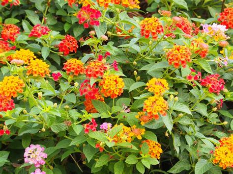 fiori per giardino soleggiato giardino soleggiato 14 piante da coltivare community