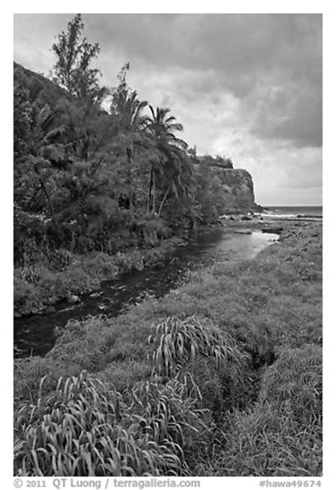 Hawa Acean Colour black and white picture photo creek palm trees and