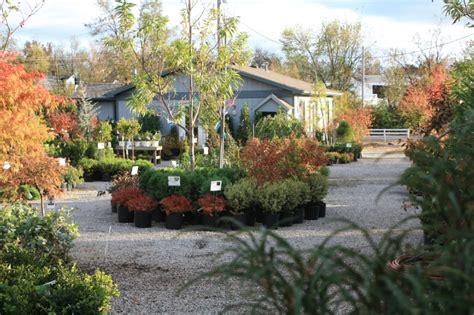 glynn young s landscaping nursery center lexington ky