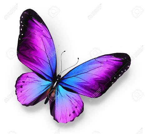 imagenes mariposas violetas violet papillon bleu isol 233 sur blanc papillons