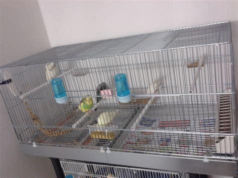 gabbia cocorita gabbia cocorite e pappagallini ondulati
