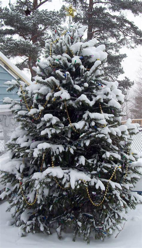 christmas tree outside in east aurora buffalo