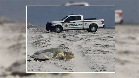 boat rs near matanzas inlet rare sea turtles nest near matanzas inlet