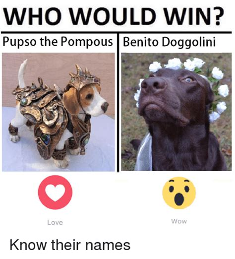 Memes And Their Names - who would win pupso the pompous benito doggolini wow love know their names love meme on me me