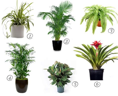 good houseplants cat safe house plants for cleaner air mind over matter