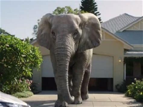 sgio house insurance sgio insurance commercial man ignoring elephant