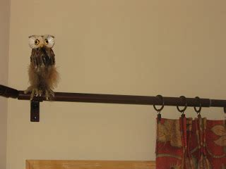owl curtain rod birshykat somebody up there doesn t like me