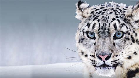 Mac Os X Snow Leopard mac wallpaper snow leopard 64 images