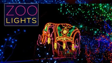 Get My Perks Half Off Admission At Denver Zoo Lights Zoo Lights Admission