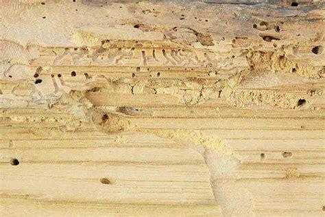 traitement termites jardin comment traiter la corrosion efficacement d 233 co solutions