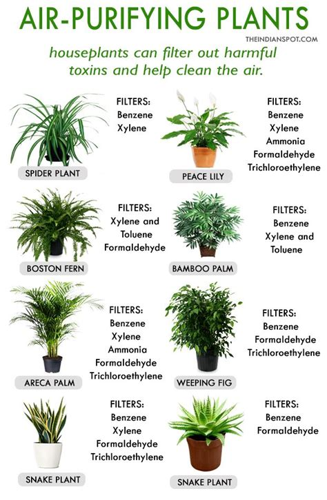 best houseplants for clean air best house plants for clean air and better health health