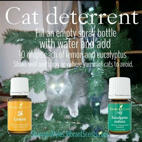 cat christmas tree repellent best 25 doterra essential oils guide ideas on essential uses essential oils