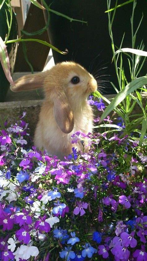 les plus belles fleurs violettes en beaucoup d images