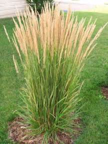 25 best ideas about ornamental grasses on pinterest