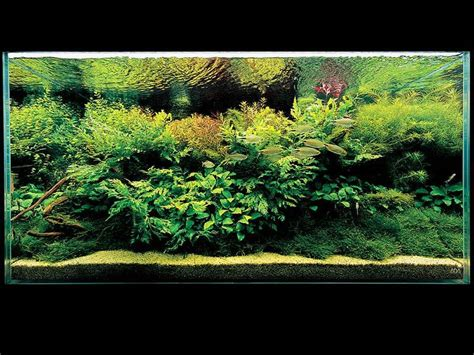 aquascape design australia aquatic eden aquascaping aquarium blog aquascaping