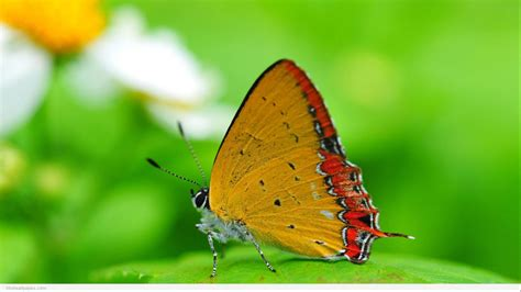 natural korean wallpaper with leaves loves butterfly full hd nature wallpapers 1080p desktop with macro photo