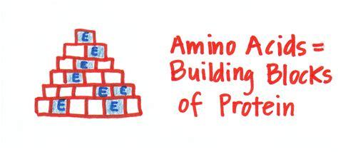 protein building blocks reflection on amino acids biochemmarie
