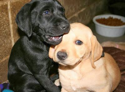 puppy shelters near me adoption near me pets world