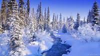Winter Scenes Wallpapers Prints Posters Wallpaper