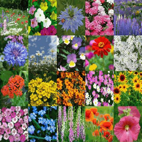 cottage garden seeds cottage garden wildflower seed mix