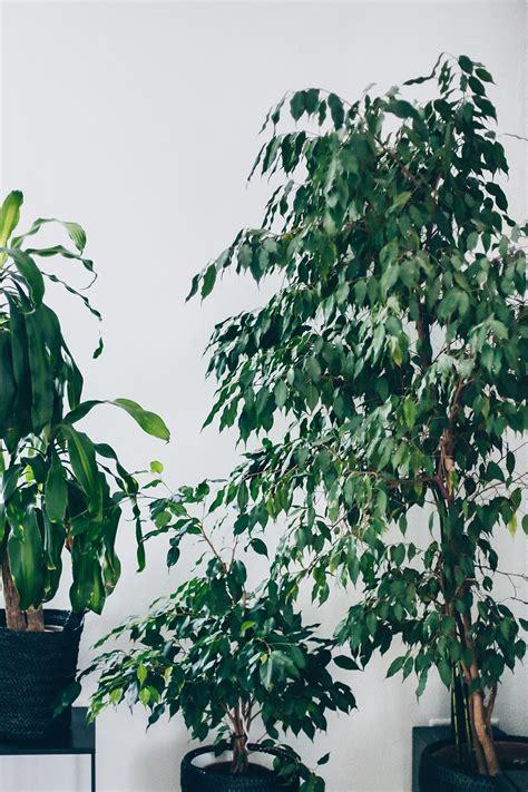 Pflegeleichte Gartenpflanzen