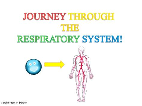 even so our journey through heartbreak and triumph books oxygen through the respiratory system